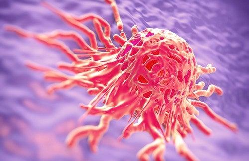 Medizinische Kräuter gegen Krebs