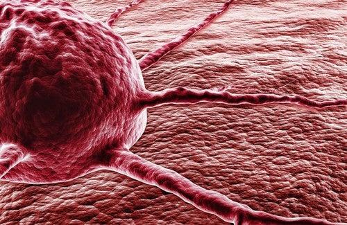 Capsaicin könnte bei der Vorbeugung von Krebs helfen
