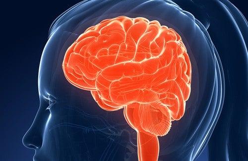 Schlecht für Gedächtnis und Intelligenz