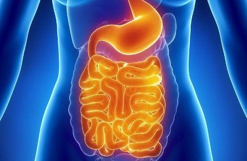 Gesunde Darmflora durch Darmsanierung