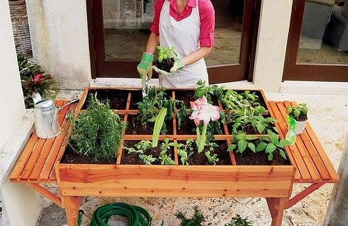 Ein ökologischer Gemüsegarten in der Stadt? - Besser Gesund Leben