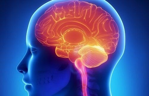 Wie kann ich mein Gehirn fit halten?
