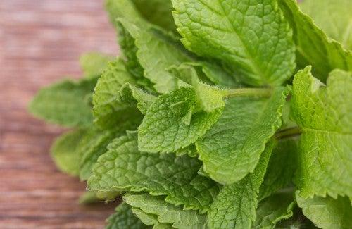 Grüne Minze – 5 gesundheitsfördernde Eigenschaften