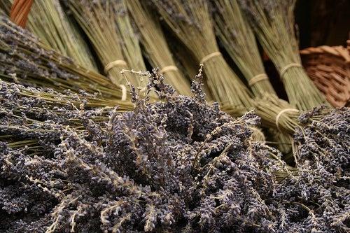 Lavendel gegen Fußgeruch