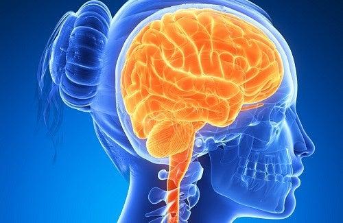 Lebensmittel, die unser Gehirn stärken