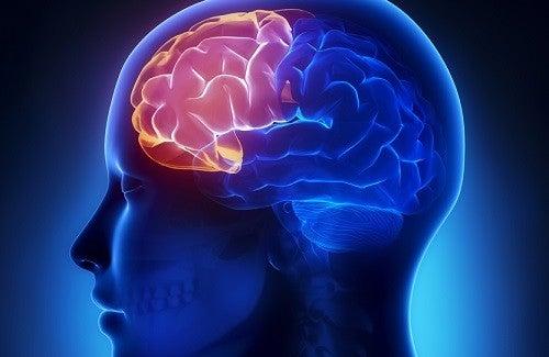 Shakes für´s Gehirn – Köstlich und gesund!