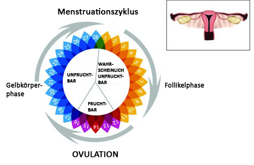 Unregelmäßige Menstruation – Warum?