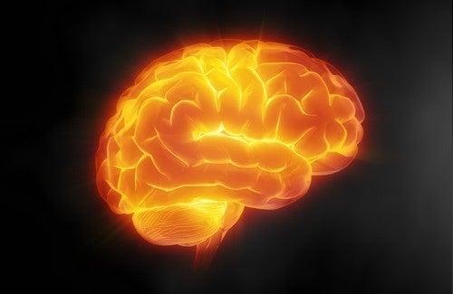 7 Tipps, um dein Gehirn fit zu halten