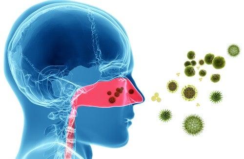 Natürliche Heilmittel gegen allergische Rhinitis