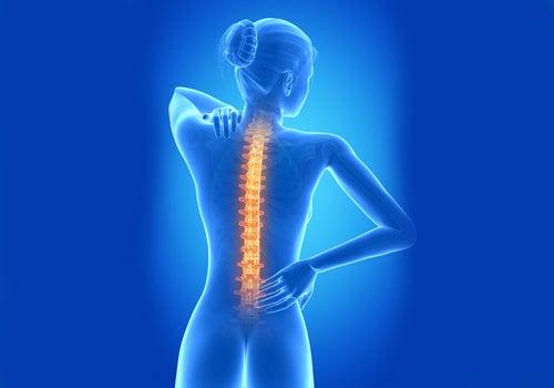 Die tägliche Liegestütze beugt Rückenschmerzen vor