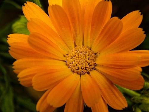 Achselhöhlen aufhellen mit Ringelblume