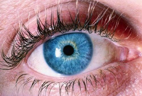 5 Tipps um Ihre Sehkraft zu schützen