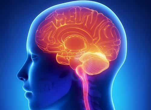 11 Angewohnheiten, die dem Gehirn schaden