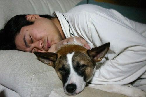 Mann-schläft-mit-Hund