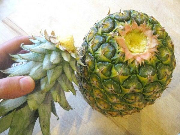 Ananas Schritt 1