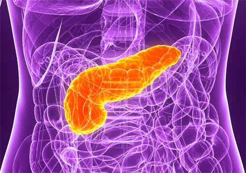 5 Tipps zum Schutz der Bauchspeicheldrüse