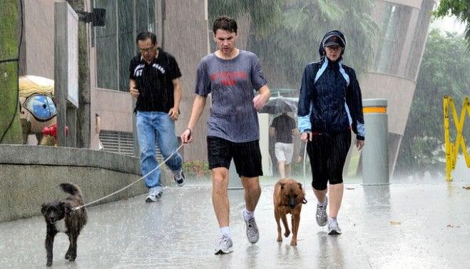 Gassigehen_mit Hund_im Regen