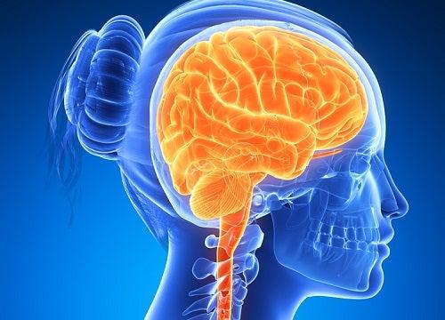 6 Nahrungsmittel für ein starkes Gehirn