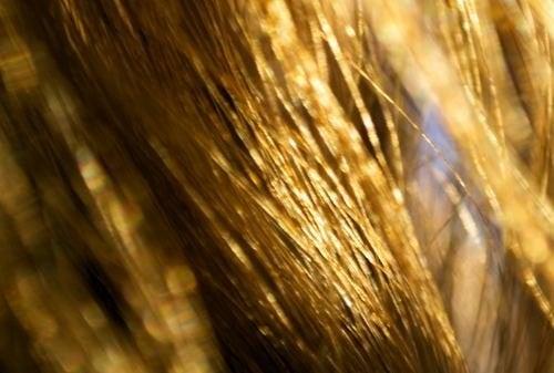 Trockenes Haar natürlich behandeln