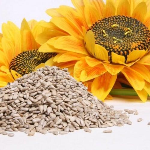 frische Sonnenblumenkerne vor einer Sonnenblume