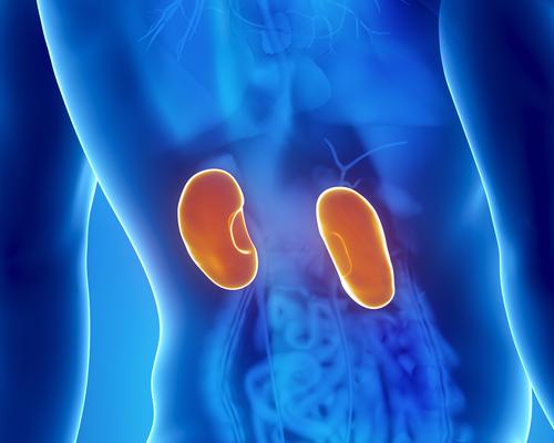 Niereninfektion – Symptome und Behandlung