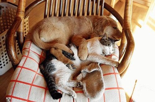 Hund und Katze sind beste Freunde