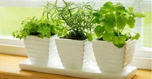 10 Pflanzen, die für positive Energie sorgen können