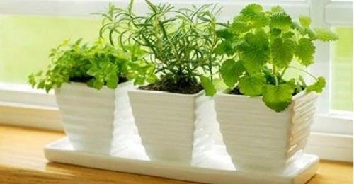 10 Pflanzen, die für positive Energie sorgen
