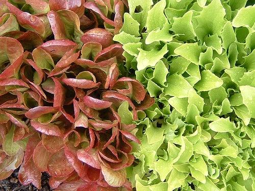 Salat ist eine gute Ernährung bei Endometriose