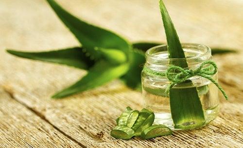 Aloe-Glas