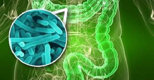 Dein Darm ist bakteriell falsch besiedelt: 10 Anzeichen