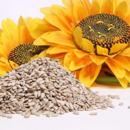 Kerne von Sonnenblumen