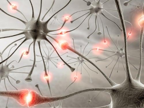 Das Gedächtnis mit Naturheilmitteln verbessern