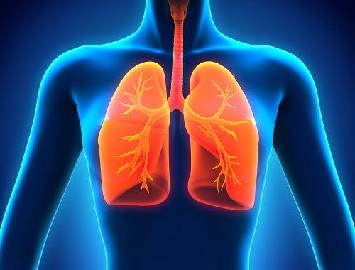 So funktioniert die Entgiftung der Lunge