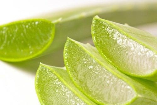 Akne natürlich behandeln mit Aloe vera