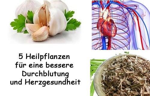 5 Pflanzen für eine bessere Durchblutung und ein gesundes Herz