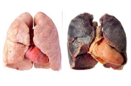 Tipps für saubere Atemwege