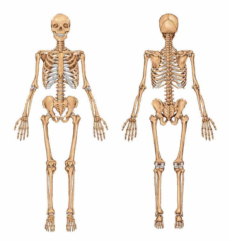 Ernährung für starke Knochen und Gelenke