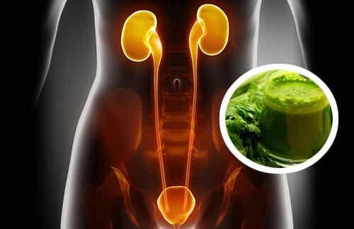 Tipps zur Ausleitung von Schadstoffen aus Nieren und Blase