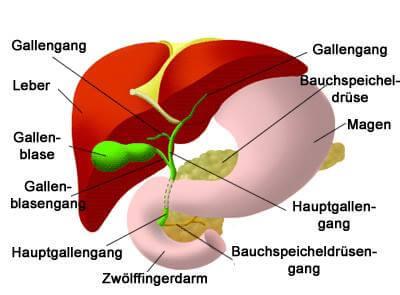 Das-Gallensystem