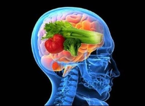 Entdecke die Vorzüge der Gehirn-Diät
