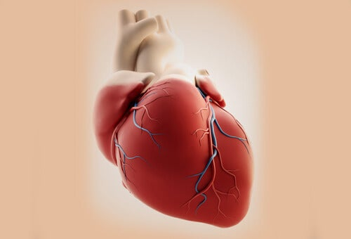 """Broken Heart Syndrom"": wenn Liebeskummer dem Herz schadet"
