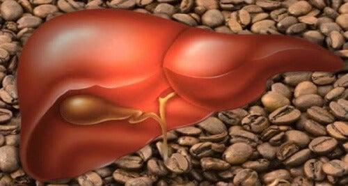 Das können 3 Tassen Kaffee für deine Leber tun