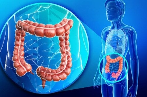 Übergewicht und Darmflora – besteht ein Zusammenhang?