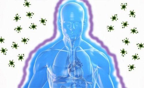 Immunsystem3