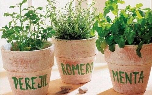 Wie man Rosmarin, Petersilie und Pfefferminze daheim anbaut