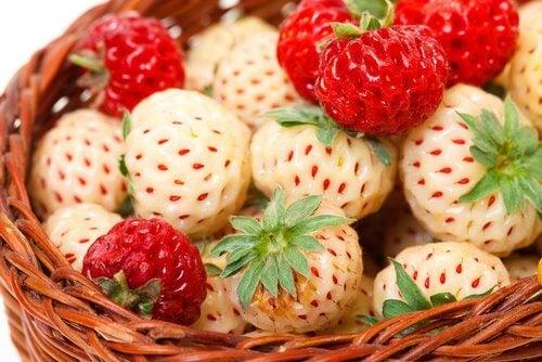 Bunte_Erdbeeren