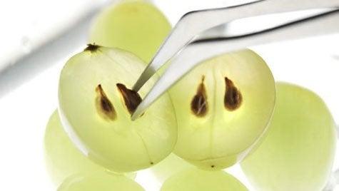 Traubenkerne