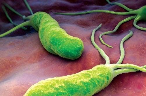 Behandlung und Ernährung mit Helicobacter pylori-Bakterien