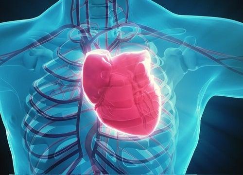 Abbildung eines Herzen